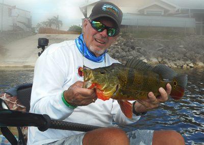Mangrove-coast-fly-fishers-club-sarasota-Peacock Bass