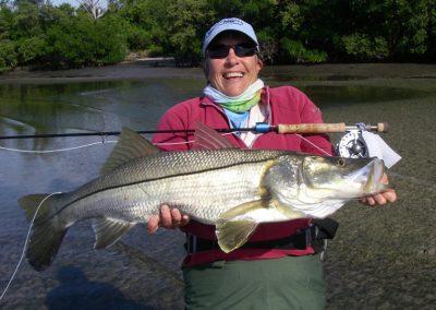 Mangrove-coast-fly-fishers-club-sarasota-snook-02